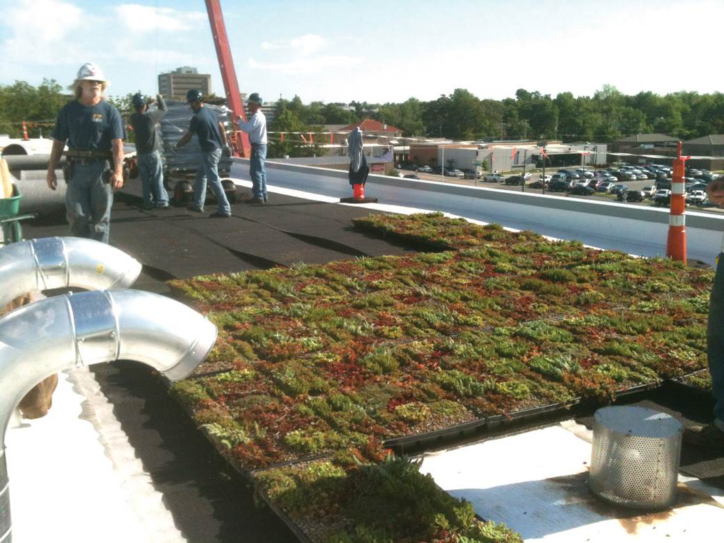 ... A 2 Foot Border Zone Between A Vegetative Roof System And Parapet Is  Recommended.