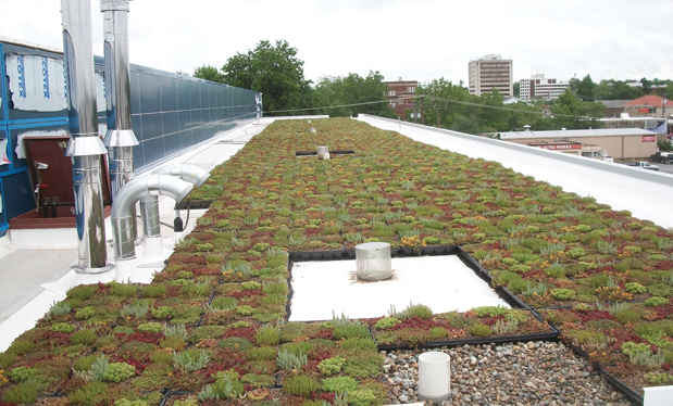 The virtues of vegetation - Vegetative roof systems continue to offer numerous benefits