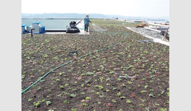 Maintaining the green roof system